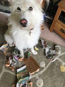 dog behaviour problem